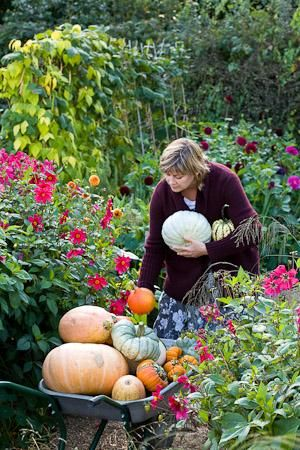 """References to pumpkins date back many centuries. The name pumpkin originated from the Greek word for """"large melon"""" which is """"pepon."""" """"Pepon"""" was changed by the French into """"pompon."""" The English changed """"pompon"""" to """"Pumpion."""" American colonists changed """"pumpion"""" into """"pumpkin.""""  Native American Indians used pumpkins as a staple in their diets centuries before the pilgrims landed. They also dried strips of pumpkin and wove them into mats."""