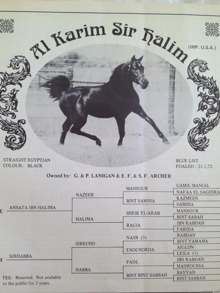 Ansata Ibn halima x Sirhabba F 21.1.72 Black straight Egyptian stallion: Hors Legends, 21172 Black, Horses Legends, Arabian Horses