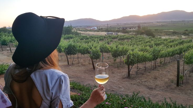 Guadalupe Valley: Baja California's Stunning Wine Country | Lavender Vines
