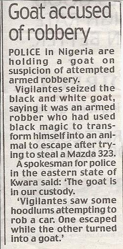 Goat robber! Funny news article!