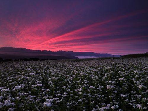作品紹介 FUJIFILM GFX 50S . 本日は風景写真家の辰野清さんが中判ミラーレスデジタルカメラ FUJIFILM GFX 50S で撮影された作品をご紹介します . 長野県伊那谷にあるそば畑の雄大な景色を GFX 50S に標準ズームレンズの GF32-64mm を組み合わせて撮影してくださいました見事な紅色の朝焼けがそばの花に薄く色を落とし込む様子は息をのむほどに美しい光景ですぜひ大きな画面でお楽しみください . FUJIFILM GFX 50SFUJINON GF23mmF4 R LM WR . . Photography by Kiyoshi Tatsuno http://ift.tt/2qxxgVV . #富士フイルム #FUJIFILM #xシリーズ #fujifilm_xseries #gfx50s #gf3264 via Fujifilm on Instagram - #photographer #photography #photo #instapic #instagram #photofreak #photolover #nikon #canon…