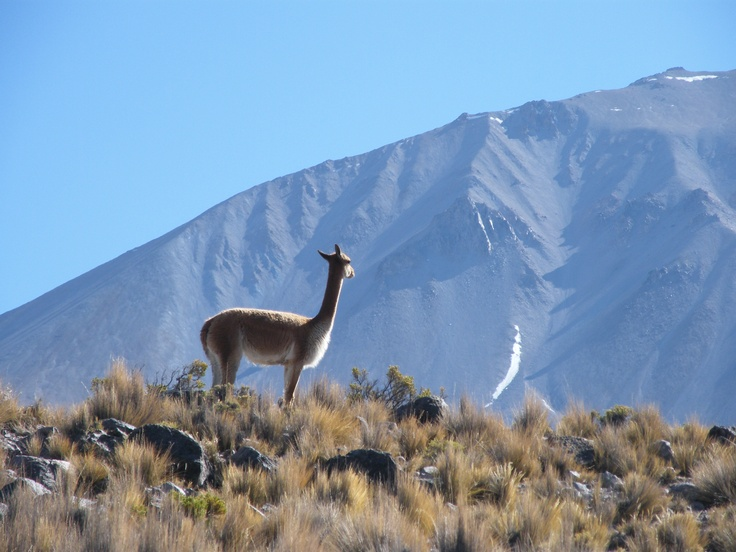Highlands (Altiplano Chile)