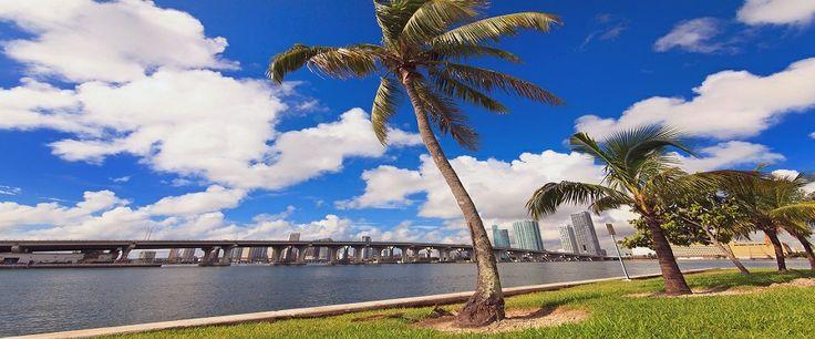 {Buy   Rent} {House   Apartment   Condo   Villa} {Miami   Miami Beach   Maceio'   Brazil} {luxury   modern