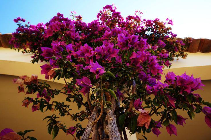 Wiosenne inspiracje. #kwiaty #flowers #hydrobox #hydroboxpl #kwiatyozdobne #diy #ideas #pomysly #inspiracje #homedecor
