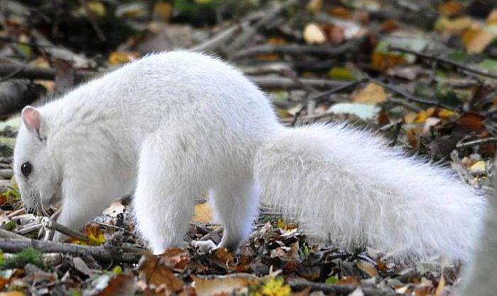 '100만분의 1 확률'로 태어나는 하얀 털 희귀 다람쥐 포착 #insight