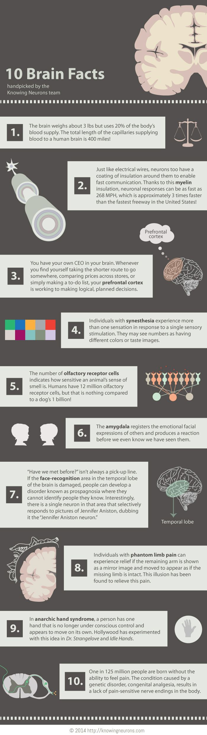 10 Brain Facts Knowing Neurons Infographic