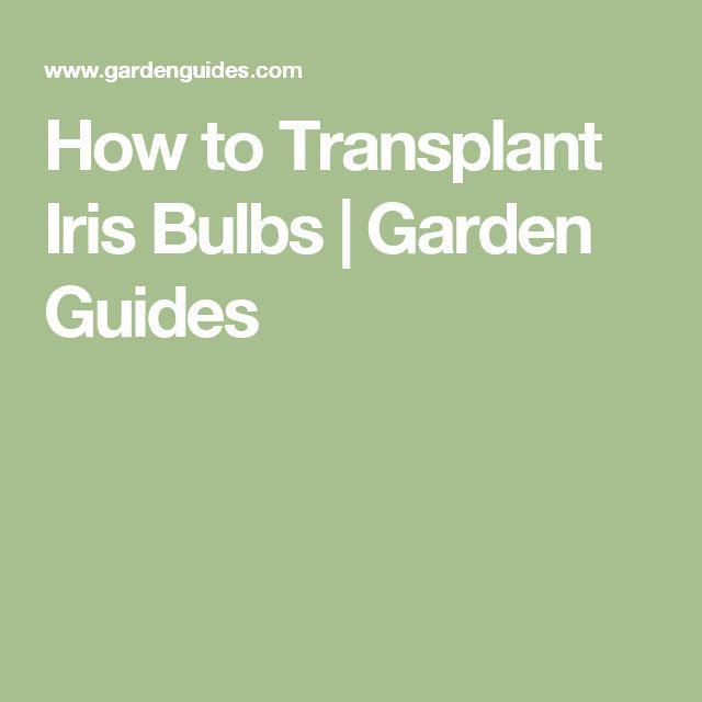 How to Transplant Iris Bulbs |  Garden Guides
