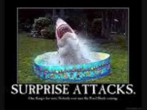 Funny Sharks | related news top headlines funny shark pictures funny shark pictures ...