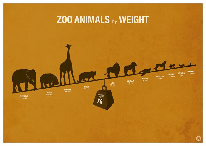 Zoo Animal Infographic Posters on Behance