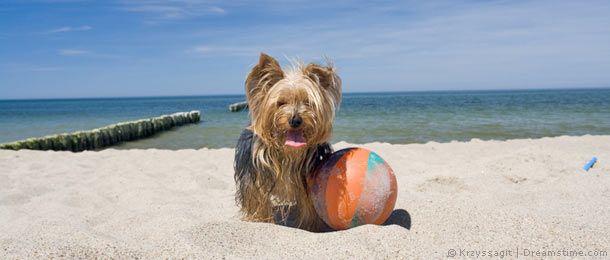 Urlaub mit Hund - Ferienhäuser in Dänemark hier günstig buchen