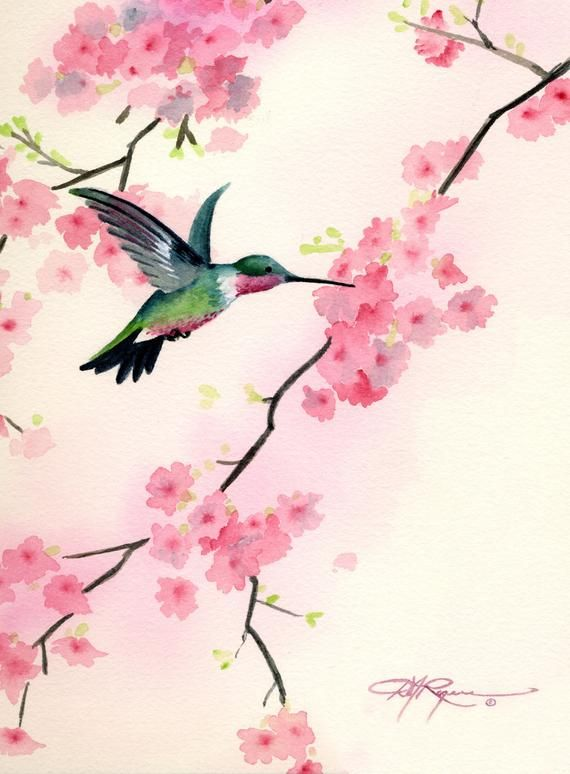 Humming Bird Cherry Blossoms Watercolor Painting Art Print by Artist DJ Rogers