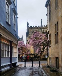 Thames Path: early spring blossom in Oxford