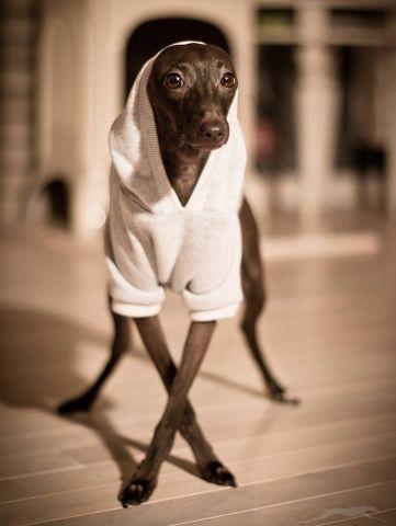 Bluza dla psa szara
