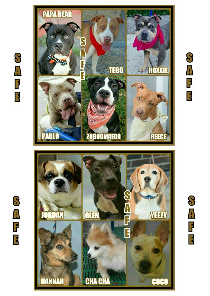 Where is happy tails puppies located