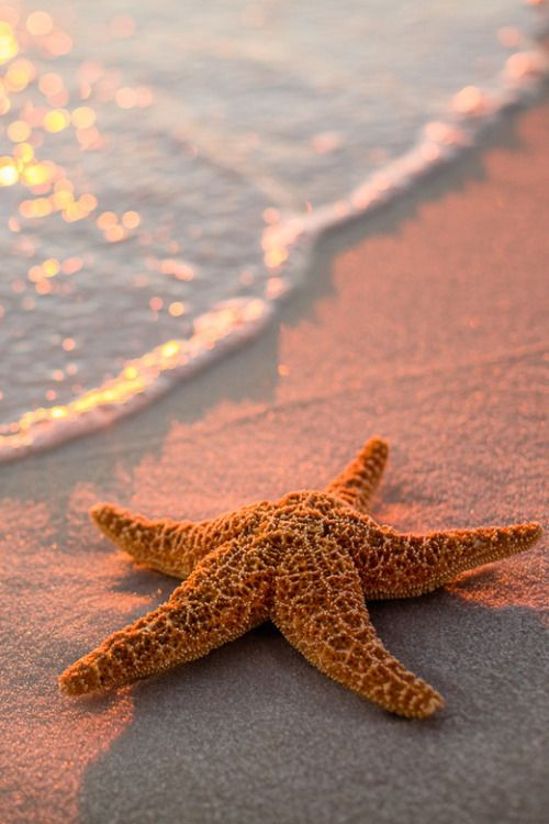 starfish at sunset