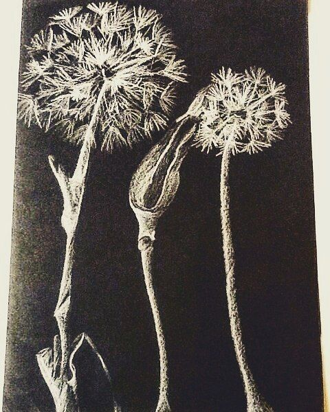 how to draw a realistic dandelion