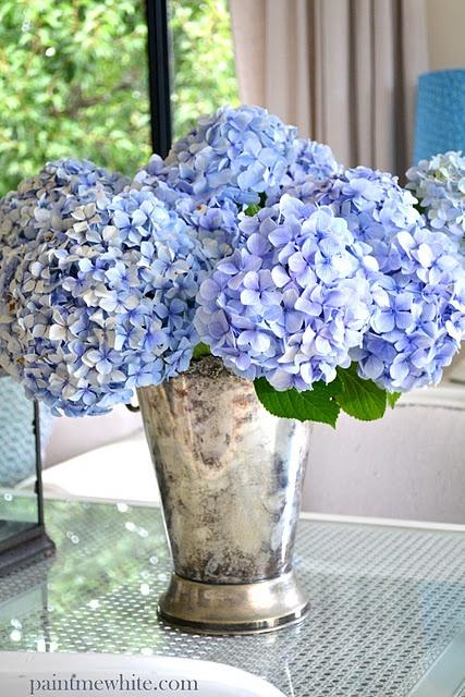 best  blue hydrangea ideas on   blue flowers, blue, Natural flower