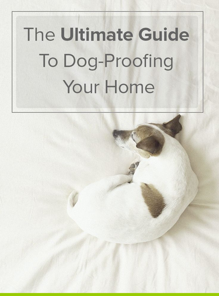 Just welcomed a new member in the family? Here's a quick guide to help you dog-proof your home in preparation for a new pup so you can limit the chances of losing or hurting your pet.