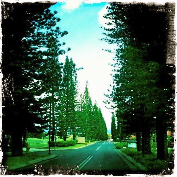 Kapalua - tree photos from West Maui, Maui Hawaii