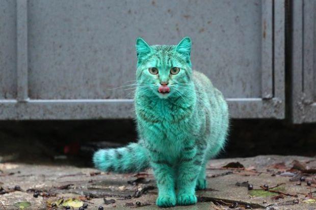 Kucing Berwarna Hijau Ini Baka Baharu?  KELIBAT seekor kucing berwarna hijau yang muncul di kawasan pantai Bulgaria mencetuskan tanda tanya kepada peminat haiwan peliharaan.  Kucing Berwarna Hijau Ini...