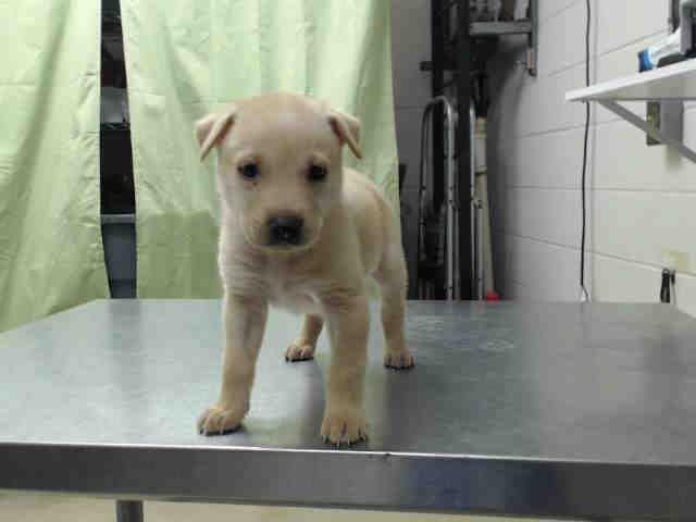Houston Tx Petharbor Com Animal Shelter Adopt A Pet