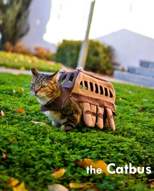 Chat-Bus – Le cosplay Totoro pour chat
