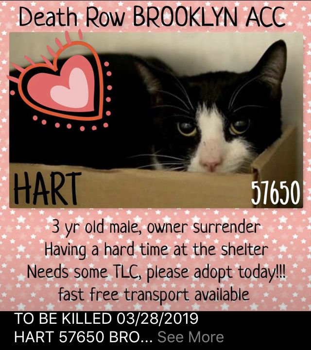 HART RESCUED💗💗03/28/19 - TO DIE 03/28/19 | Kittens & Cats