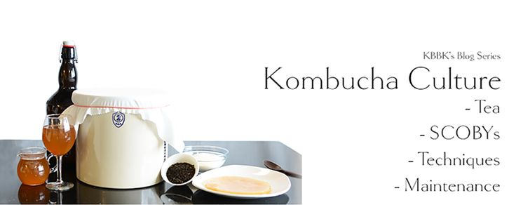 New York's Premier Kombucha Company - your source for kombucha brewing kits, Brewery Fresh SCOBYs, specialty kombucha teas and flavoring ingredients