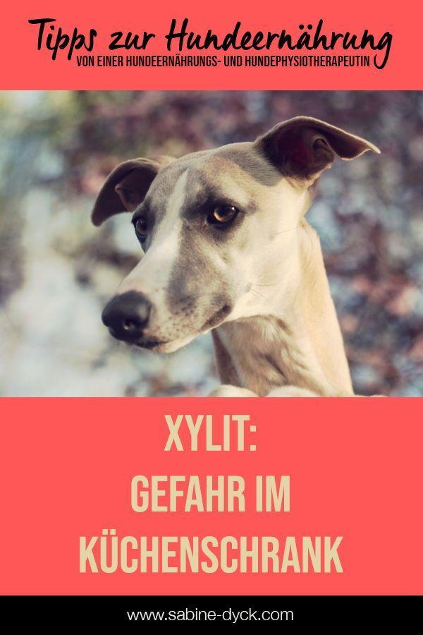 Xylit Hund