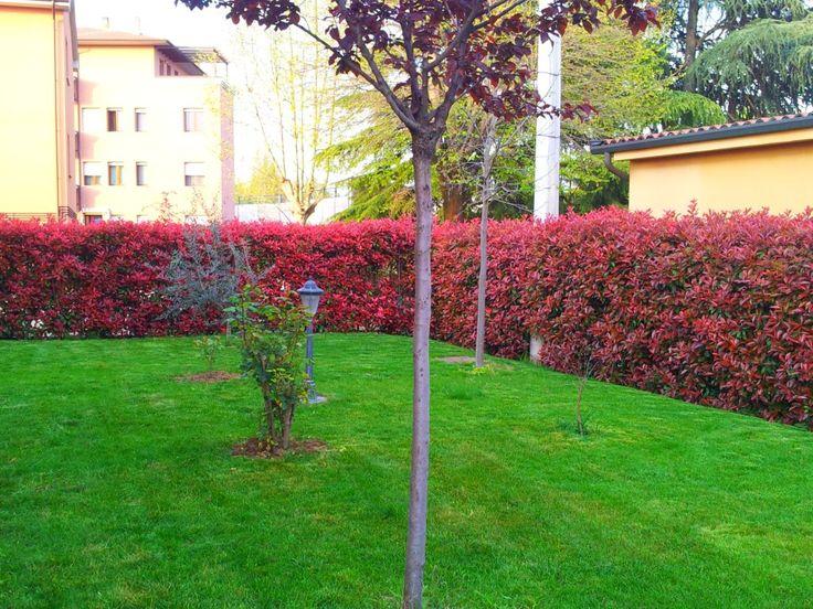 Oltre 25 fantastiche idee su siepi da giardino su - Siepi da giardino ...
