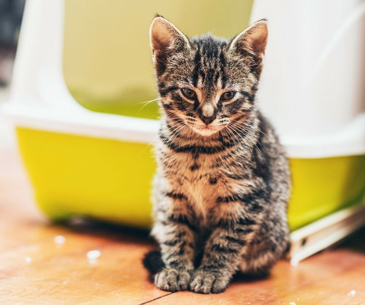 how to change cat litter