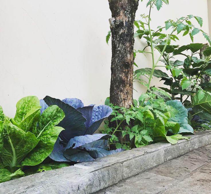 """84 curtidas, 3 comentários - @republicadojardim no Instagram: """"Coma seu jardim!!! Implantar um jardim comestível de forma inteligente nos permite juntar dois…"""""""