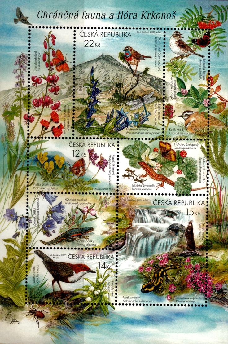 Chráněná fauna a flóra Krkonoš