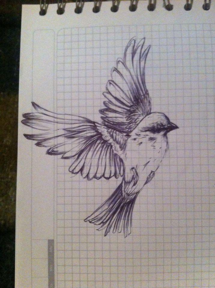 Técnica : bolígrafo