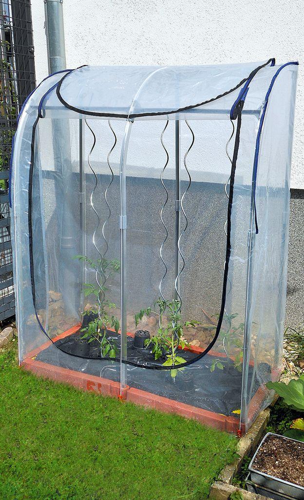 Tomatenzelt Selbst De In 2020 Tomaten Gewachshaus Tomaten Haus Tomatenhaus Selber Bauen