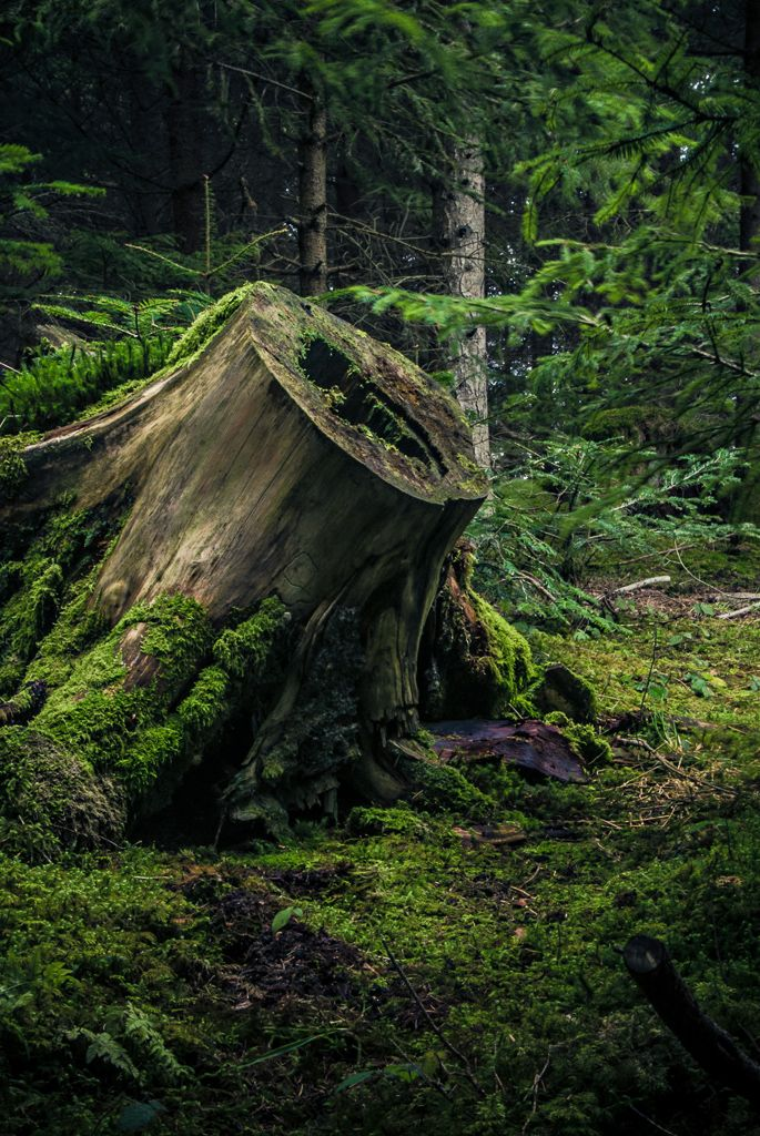 tree stump + moss #nature #photography