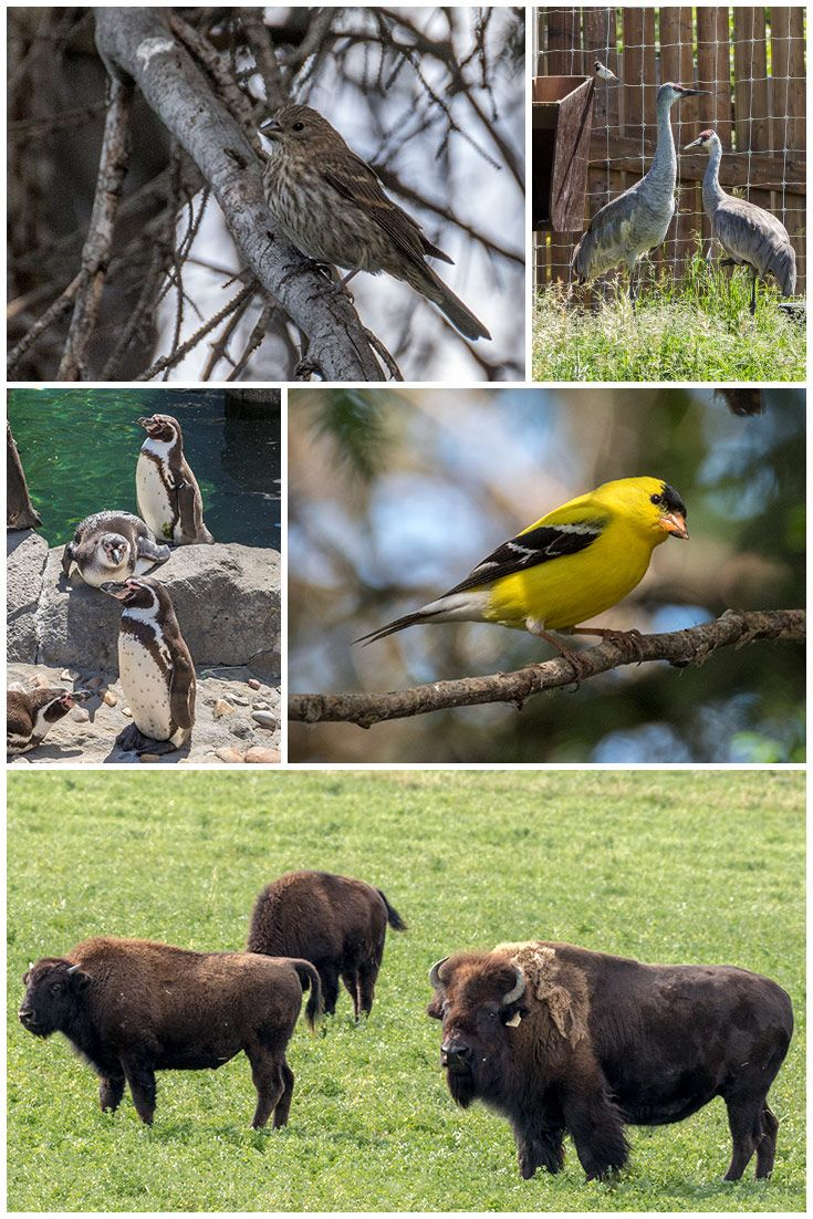Amazing critters in Alberta