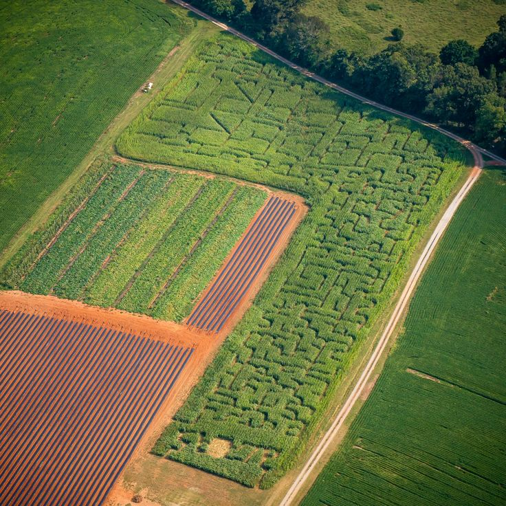 New Corn Maze Prices  - 8 yrs and up - $6 - 7 yrs and under - Free - Students, Seniors, Groups - $5  If you've never experienced a Corn Maze before You should try one! We are just 15 minutes from Lynchburg, VA...  We especially would like to extend an invitation to church groups, youth groups, college students and high school students to visit at night for the Corn Maze.