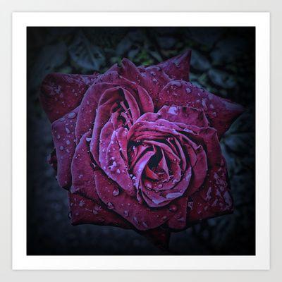 Purple Rose II Art Print by AngelEowyn - $17.16