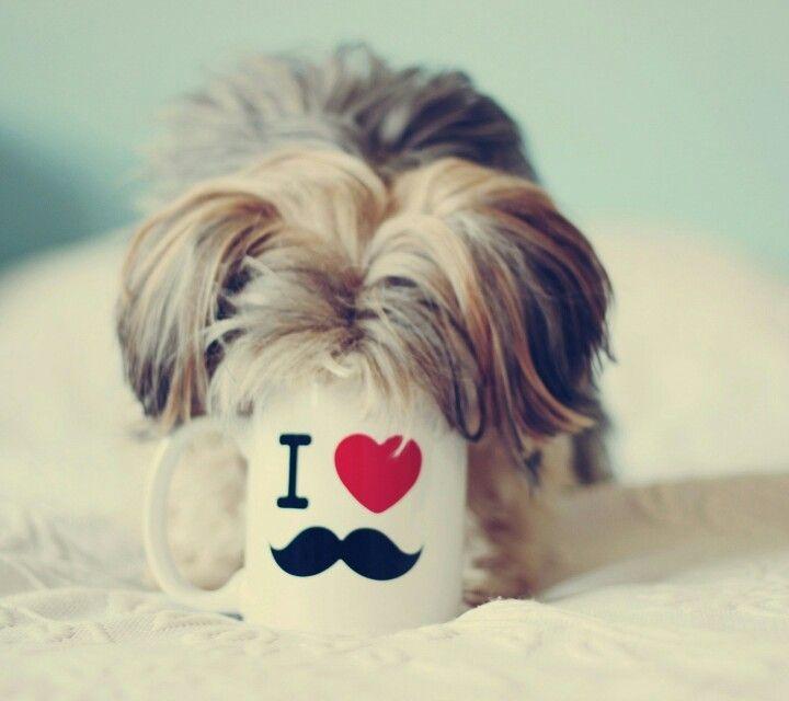 Der Hund der Schnurrbart de halt liebt ...