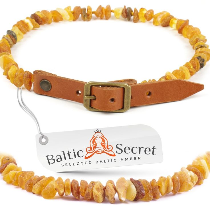 Best Value Flea Tick Collar For Dogs