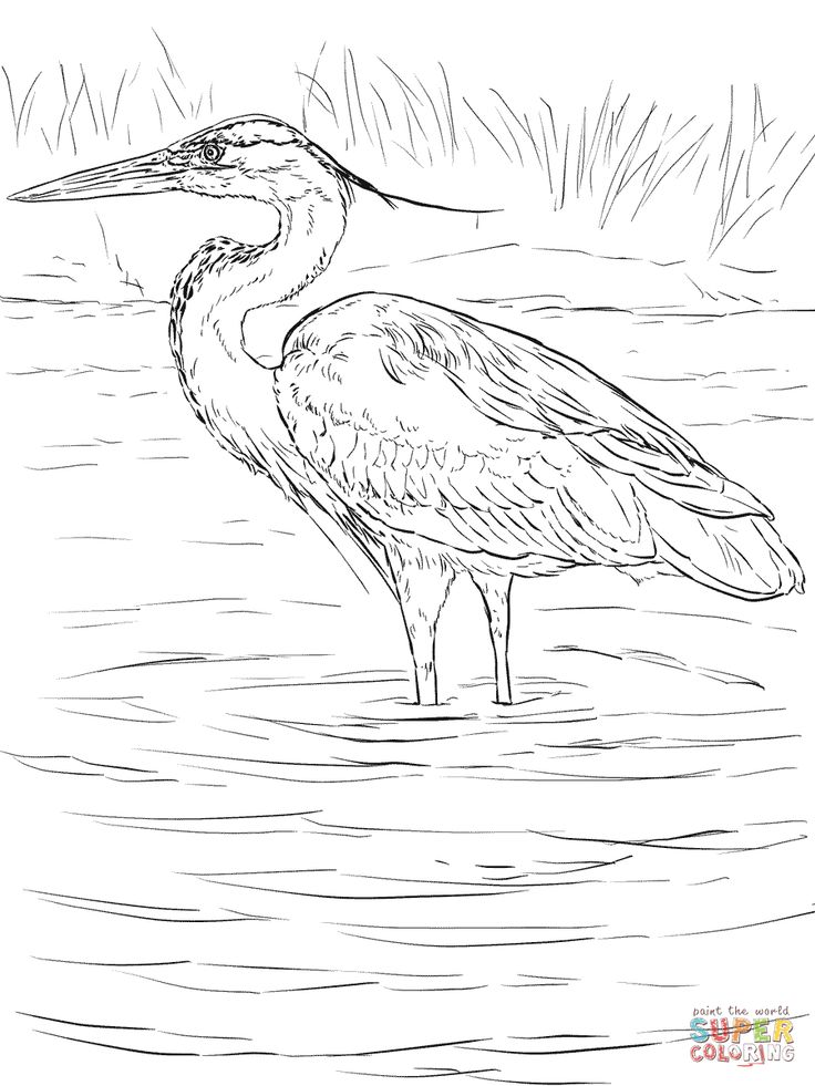great blue heron stands in wetland coloring page coloring animals bird. Black Bedroom Furniture Sets. Home Design Ideas