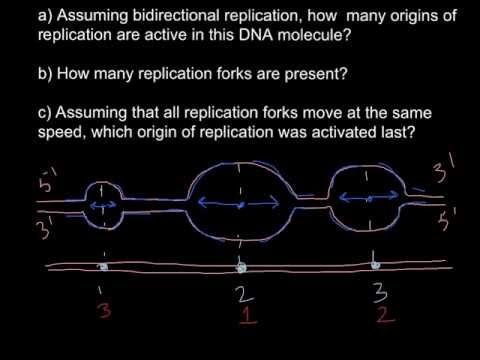 DNA. Origin of replication - YouTube