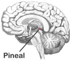 List of Ways to Decalcify the Pineal Gland