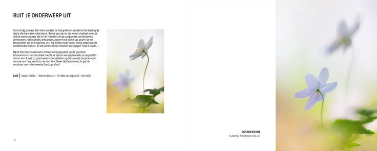 OOG voor BEELD | Jeffrey Van Daele Nature Photography