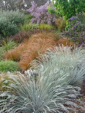 Australian and other grasses by Arthur Lathouris, Australian garden designer (via Houzz)