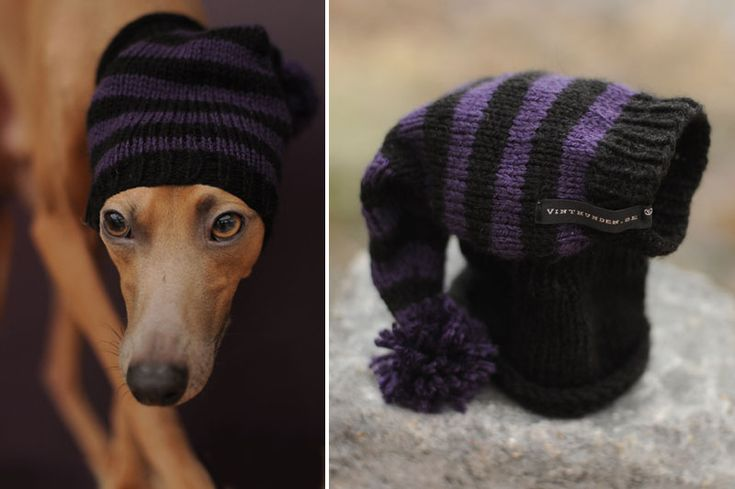 I am not a fan of doggy clothes but if I had a sight hound I would be getting one of these!!