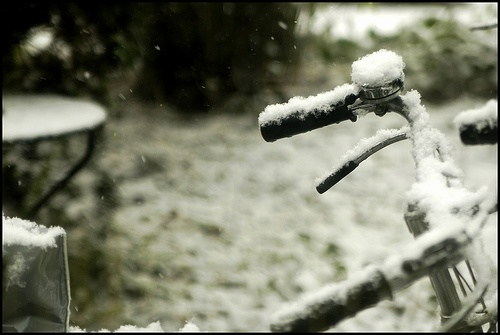 Snow#3
