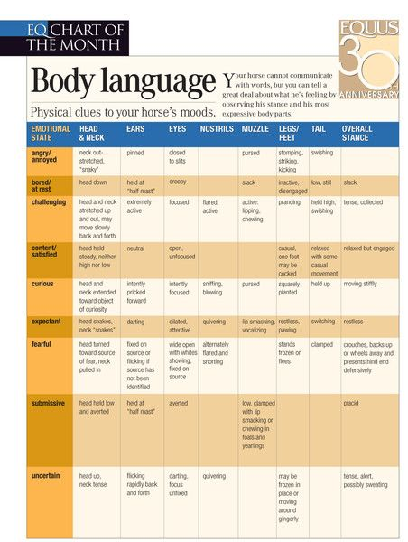 Horse Body Language Chart | Educational Resource October 06 2013
