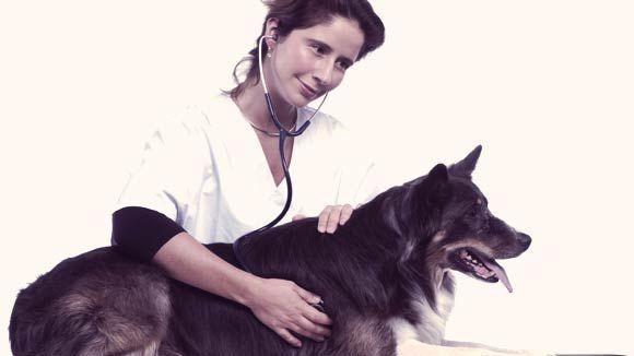 10 Vet Questions for Senior Dogs   PetCareRx